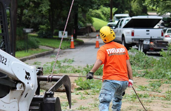 Arborist Consultations-Little Rock Tree Trimming and Stump Grinding Services-We Offer Tree Trimming Services, Tree Removal, Tree Pruning, Tree Cutting, Residential and Commercial Tree Trimming Services, Storm Damage, Emergency Tree Removal, Land Clearing, Tree Companies, Tree Care Service, Stump Grinding, and we're the Best Tree Trimming Company Near You Guaranteed!