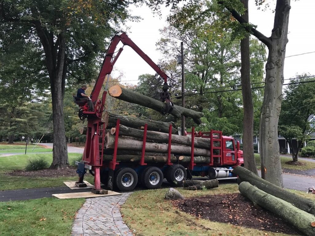 Commercial Tree Services-Little Rock Tree Trimming and Stump Grinding Services-We Offer Tree Trimming Services, Tree Removal, Tree Pruning, Tree Cutting, Residential and Commercial Tree Trimming Services, Storm Damage, Emergency Tree Removal, Land Clearing, Tree Companies, Tree Care Service, Stump Grinding, and we're the Best Tree Trimming Company Near You Guaranteed!