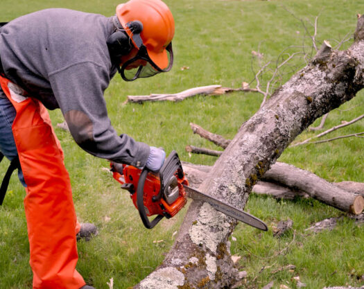 Emergency Tree Removal-Little Rock Tree Trimming and Stump Grinding Services-We Offer Tree Trimming Services, Tree Removal, Tree Pruning, Tree Cutting, Residential and Commercial Tree Trimming Services, Storm Damage, Emergency Tree Removal, Land Clearing, Tree Companies, Tree Care Service, Stump Grinding, and we're the Best Tree Trimming Company Near You Guaranteed!
