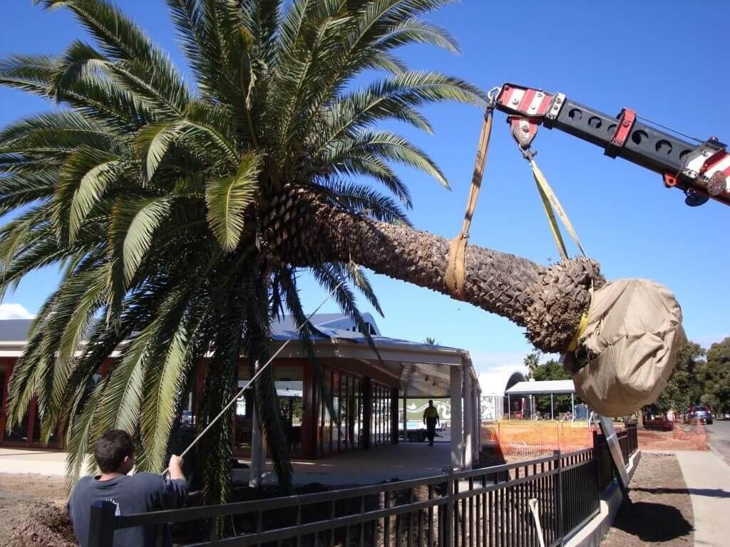 Palm Tree Removal-Little Rock Tree Trimming and Stump Grinding Services-We Offer Tree Trimming Services, Tree Removal, Tree Pruning, Tree Cutting, Residential and Commercial Tree Trimming Services, Storm Damage, Emergency Tree Removal, Land Clearing, Tree Companies, Tree Care Service, Stump Grinding, and we're the Best Tree Trimming Company Near You Guaranteed!