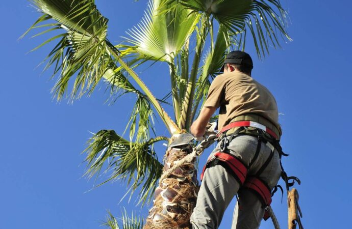 Palm Tree Trimming and Removal-Little Rock Tree Trimming and Stump Grinding Services-We Offer Tree Trimming Services, Tree Removal, Tree Pruning, Tree Cutting, Residential and Commercial Tree Trimming Services, Storm Damage, Emergency Tree Removal, Land Clearing, Tree Companies, Tree Care Service, Stump Grinding, and we're the Best Tree Trimming Company Near You Guaranteed!