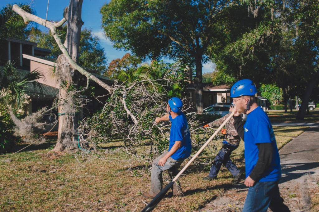 Residential Tree Services-Little Rock Tree Trimming and Stump Grinding Services-We Offer Tree Trimming Services, Tree Removal, Tree Pruning, Tree Cutting, Residential and Commercial Tree Trimming Services, Storm Damage, Emergency Tree Removal, Land Clearing, Tree Companies, Tree Care Service, Stump Grinding, and we're the Best Tree Trimming Company Near You Guaranteed!