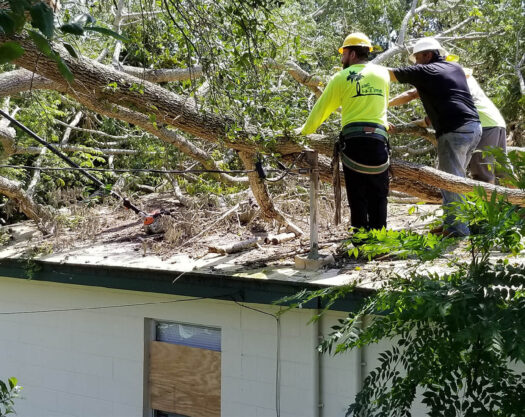 Storm Damage-Little Rock Tree Trimming and Stump Grinding Services-We Offer Tree Trimming Services, Tree Removal, Tree Pruning, Tree Cutting, Residential and Commercial Tree Trimming Services, Storm Damage, Emergency Tree Removal, Land Clearing, Tree Companies, Tree Care Service, Stump Grinding, and we're the Best Tree Trimming Company Near You Guaranteed!