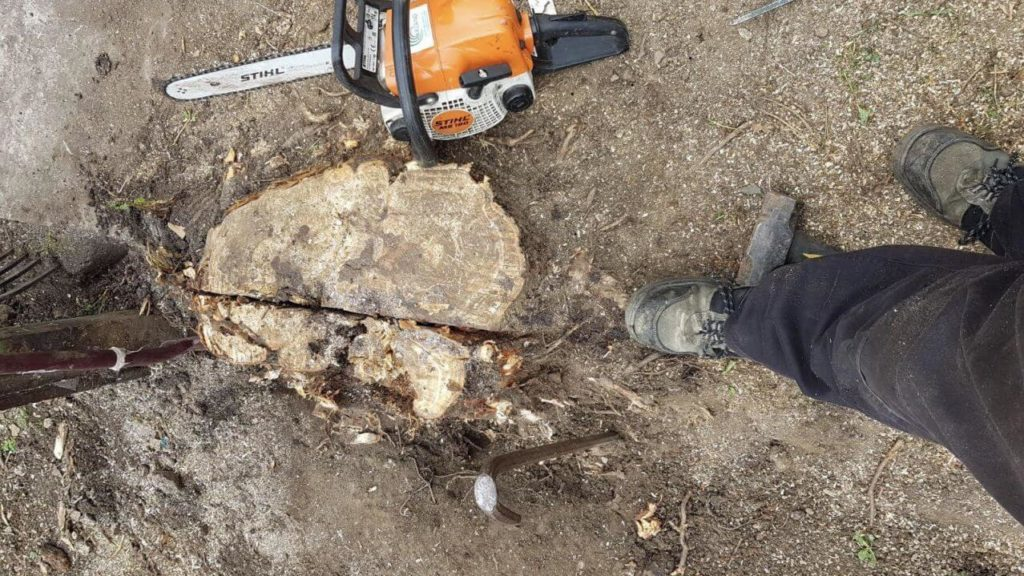 Stump Removal-Little Rock Tree Trimming and Stump Grinding Services-We Offer Tree Trimming Services, Tree Removal, Tree Pruning, Tree Cutting, Residential and Commercial Tree Trimming Services, Storm Damage, Emergency Tree Removal, Land Clearing, Tree Companies, Tree Care Service, Stump Grinding, and we're the Best Tree Trimming Company Near You Guaranteed!