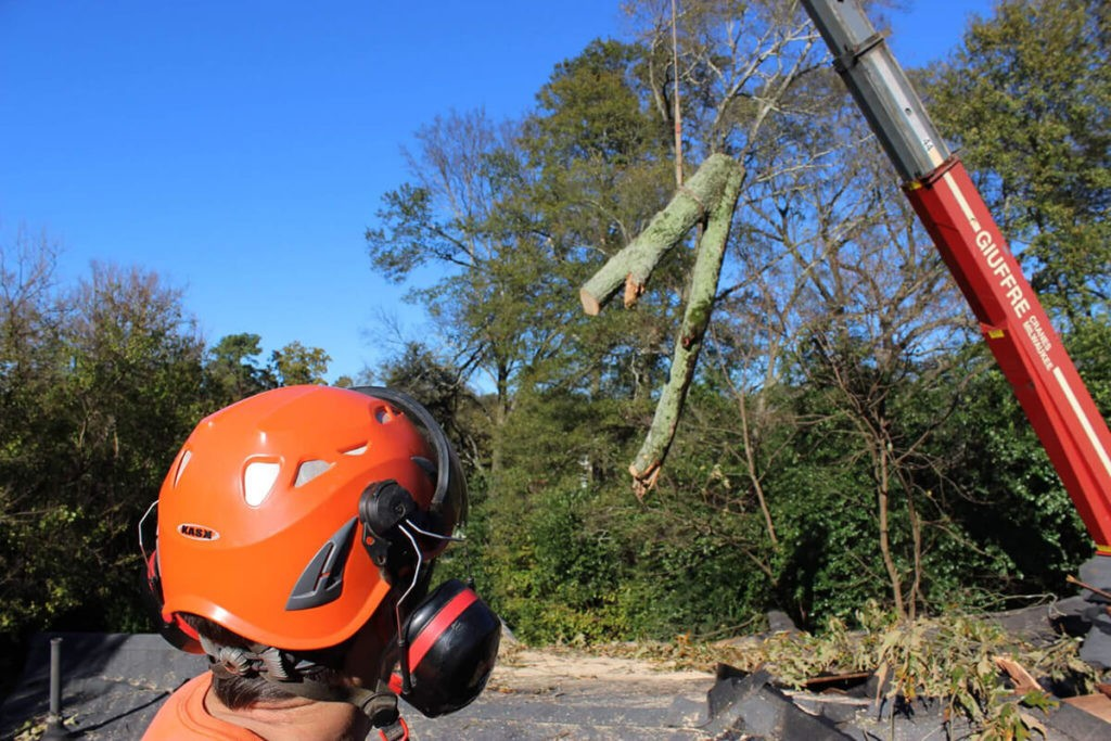 Tree Cutting-Little Rock Tree Trimming and Stump Grinding Services-We Offer Tree Trimming Services, Tree Removal, Tree Pruning, Tree Cutting, Residential and Commercial Tree Trimming Services, Storm Damage, Emergency Tree Removal, Land Clearing, Tree Companies, Tree Care Service, Stump Grinding, and we're the Best Tree Trimming Company Near You Guaranteed!