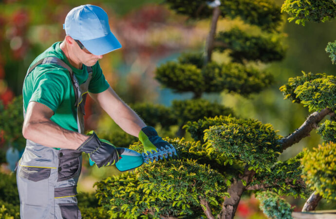 Tree Pruning-Little Rock Tree Trimming and Stump Grinding Services-We Offer Tree Trimming Services, Tree Removal, Tree Pruning, Tree Cutting, Residential and Commercial Tree Trimming Services, Storm Damage, Emergency Tree Removal, Land Clearing, Tree Companies, Tree Care Service, Stump Grinding, and we're the Best Tree Trimming Company Near You Guaranteed!