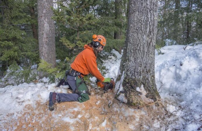 Tree Removal-Little Rock Tree Trimming and Stump Grinding Services-We Offer Tree Trimming Services, Tree Removal, Tree Pruning, Tree Cutting, Residential and Commercial Tree Trimming Services, Storm Damage, Emergency Tree Removal, Land Clearing, Tree Companies, Tree Care Service, Stump Grinding, and we're the Best Tree Trimming Company Near You Guaranteed!