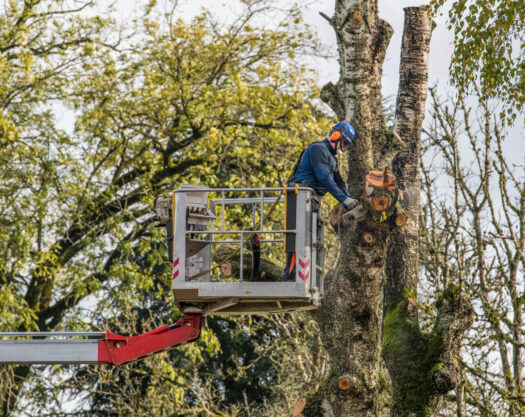 Tree Trimming-Little Rock Tree Trimming and Stump Grinding Services-We Offer Tree Trimming Services, Tree Removal, Tree Pruning, Tree Cutting, Residential and Commercial Tree Trimming Services, Storm Damage, Emergency Tree Removal, Land Clearing, Tree Companies, Tree Care Service, Stump Grinding, and we're the Best Tree Trimming Company Near You Guaranteed!