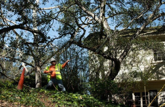 Alexander-Little Rock Tree Trimming and Stump Grinding Services-We Offer Tree Trimming Services, Tree Removal, Tree Pruning, Tree Cutting, Residential and Commercial Tree Trimming Services, Storm Damage, Emergency Tree Removal, Land Clearing, Tree Companies, Tree Care Service, Stump Grinding, and we're the Best Tree Trimming Company Near You Guaranteed!