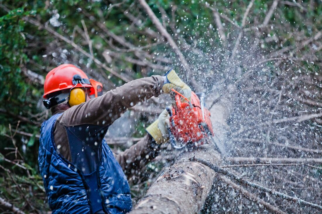 College Station-Little Rock Tree Trimming and Stump Grinding Services-We Offer Tree Trimming Services, Tree Removal, Tree Pruning, Tree Cutting, Residential and Commercial Tree Trimming Services, Storm Damage, Emergency Tree Removal, Land Clearing, Tree Companies, Tree Care Service, Stump Grinding, and we're the Best Tree Trimming Company Near You Guaranteed!
