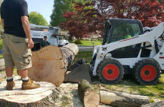 Woodyardville-Little Rock Tree Trimming and Stump Grinding Services-We Offer Tree Trimming Services, Tree Removal, Tree Pruning, Tree Cutting, Residential and Commercial Tree Trimming Services, Storm Damage, Emergency Tree Removal, Land Clearing, Tree Companies, Tree Care Service, Stump Grinding, and we're the Best Tree Trimming Company Near You Guaranteed!